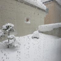 春の気配もあるのに大雪!!