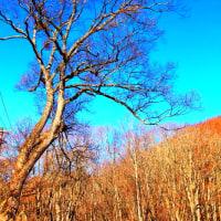 裏磐梯初冬の風景