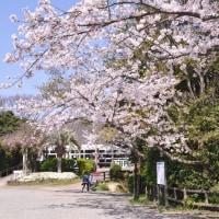 プレバト!!春の季語