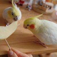 キビたん☆りんごに夢中特集