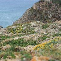 ポルトガル 春の花紀行(1)
