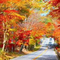 秋の信濃路・・・軽井沢ロマンチック街道・・・紅葉
