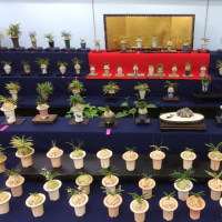 四国山草園展示会