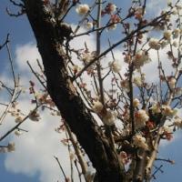 【夫婦の時間】変り映えしない風景も春の変化