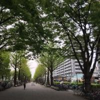 【教室】光が丘 沖縄三線教室 お稽古 (^o^)/