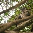 7月17日の鳥撮り散歩・・・