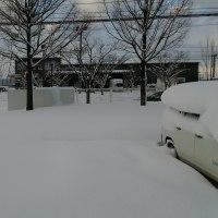 雪だっ!!
