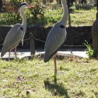 大阪で最も古い公園の一つ 住吉公園 (大阪市)