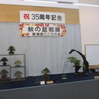 秋の盆栽展