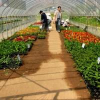 ニセコ高校の花・野菜苗販売会