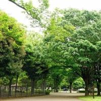 訪れることが少ない小金井公園の東側をスケッチ その2