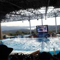 白浜アドベンチャーワールドのイルカショー(4)