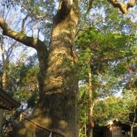 おのころ島探索「ご神木のパワー」