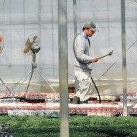 アモーレ 咲きました! & Pu-chin トマトの潅水 & デルフィニューム