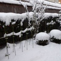 この冬で最も寒い日