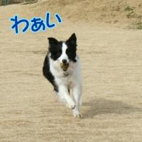 走ったり登ったり~羽生牧場