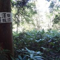 犬伏山(いぬぶしやま)登山行・続き~