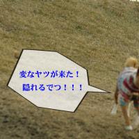 #3_UFO特番! あたすは見た!衝撃の宇宙人 チャララァ~~ チャラララァ~~♪#3