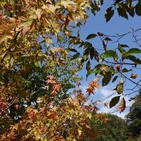秋を見つけに山都へ