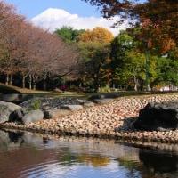 中央公園から紅葉と富士山