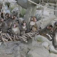 さる年を・・・高崎山自然動物園 2016/12/03