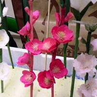 春を告げる花を生み出す人たち