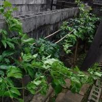 逞しき植物たち