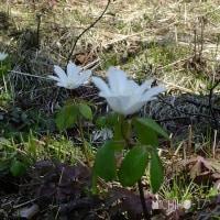 平成29年4月30日(日) 裏山で花見♪