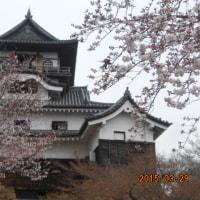 犬山城と櫻(平27)
