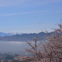 大善寺の桜~甲州市②