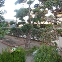 東側の庭改造(生垣撤去)