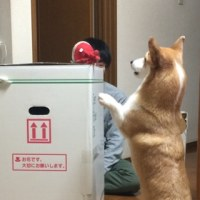 L立ちあがる!