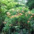 鎌倉の夏!