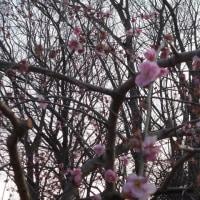 里山にも春が来たよ