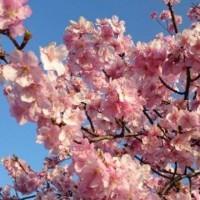 春は確実に・・・♪