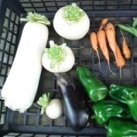 冬の夏野菜