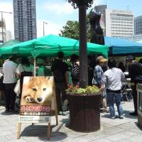 JR浜松駅北口広場アニマルフォスターペアレンツふれあい譲渡会