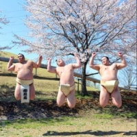 「玉鷲、御嶽海、勢が豪快ジャンプ!桜の下で山稽古」とのニュースっす。