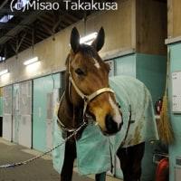 日高育成牧場の遠野馬(1)