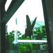 「写真&俳句!」 夏蝶や開けられませぬこの窓は