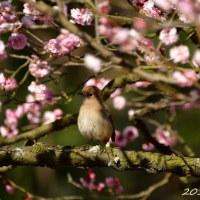栗林公園 H29春