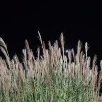 秋の誘い庭園  2013.10.12 「97」