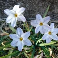 2017/3/30今日の花