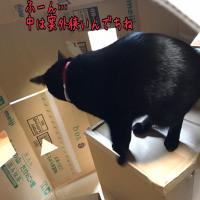 ニャッスルドーム IN ニコ☆