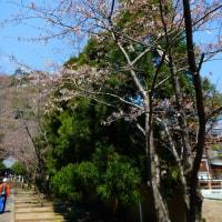 『花便り』 高来神社