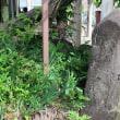 諏訪大社本宮のお参り