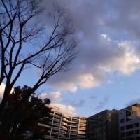 今日の私は796 【1月16日の博多の朝です】