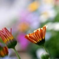 光が静かに花を照らす