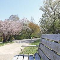 桜の散歩道