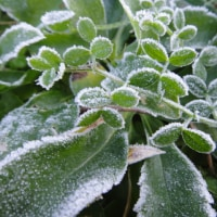 初霜の降りた朝
